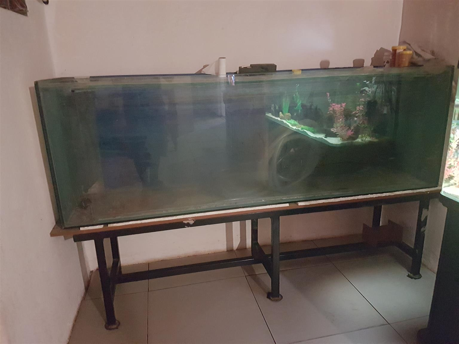 2 meter x 600 mm deep x 450 mm aquarium with metal stand for sale
