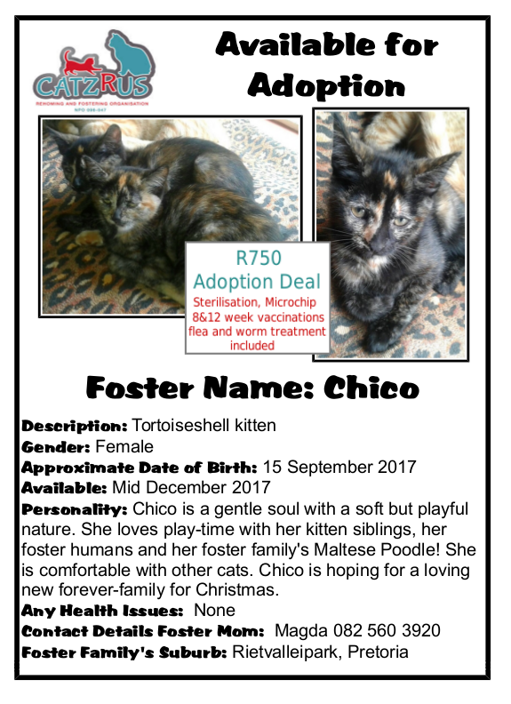 Our favourite breed is RESCUE! Adopt responsibly from a registered rescue organisation. Introducing Chico!
