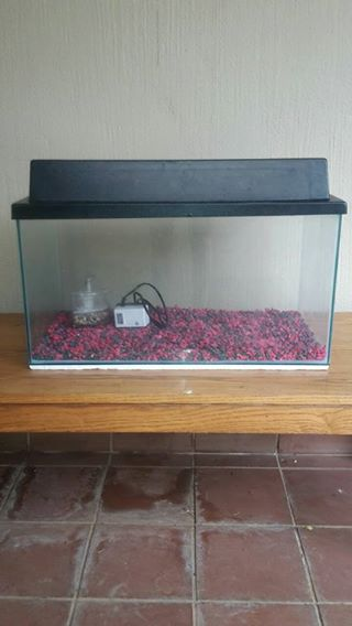 100L fish tank, red and black gravel, a pump and filter