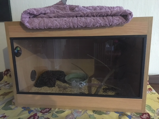 Ball python and cage for sale