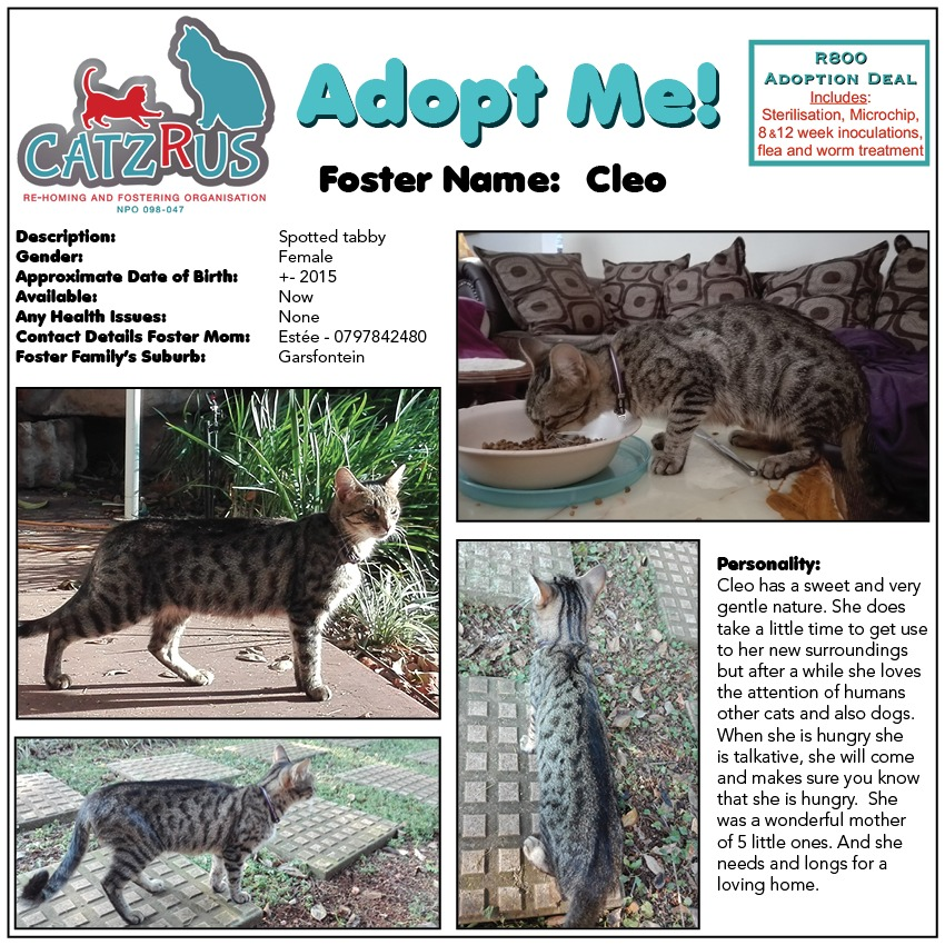 Sweet Gentle Cleo  - a CatzRUs rescue. Adoption includes Sterilisation, Microchip, Inoculations, DeWorming and lots of Foster love!