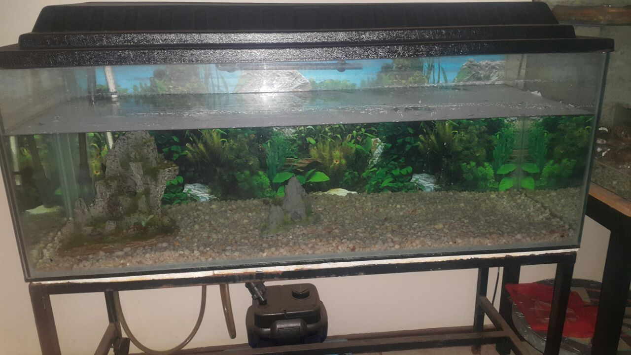 Big complete fish tank
