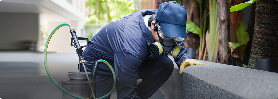 Pest control services for low services