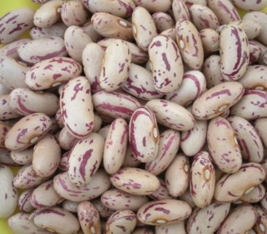 Red and white Speckled beans for sale grade A