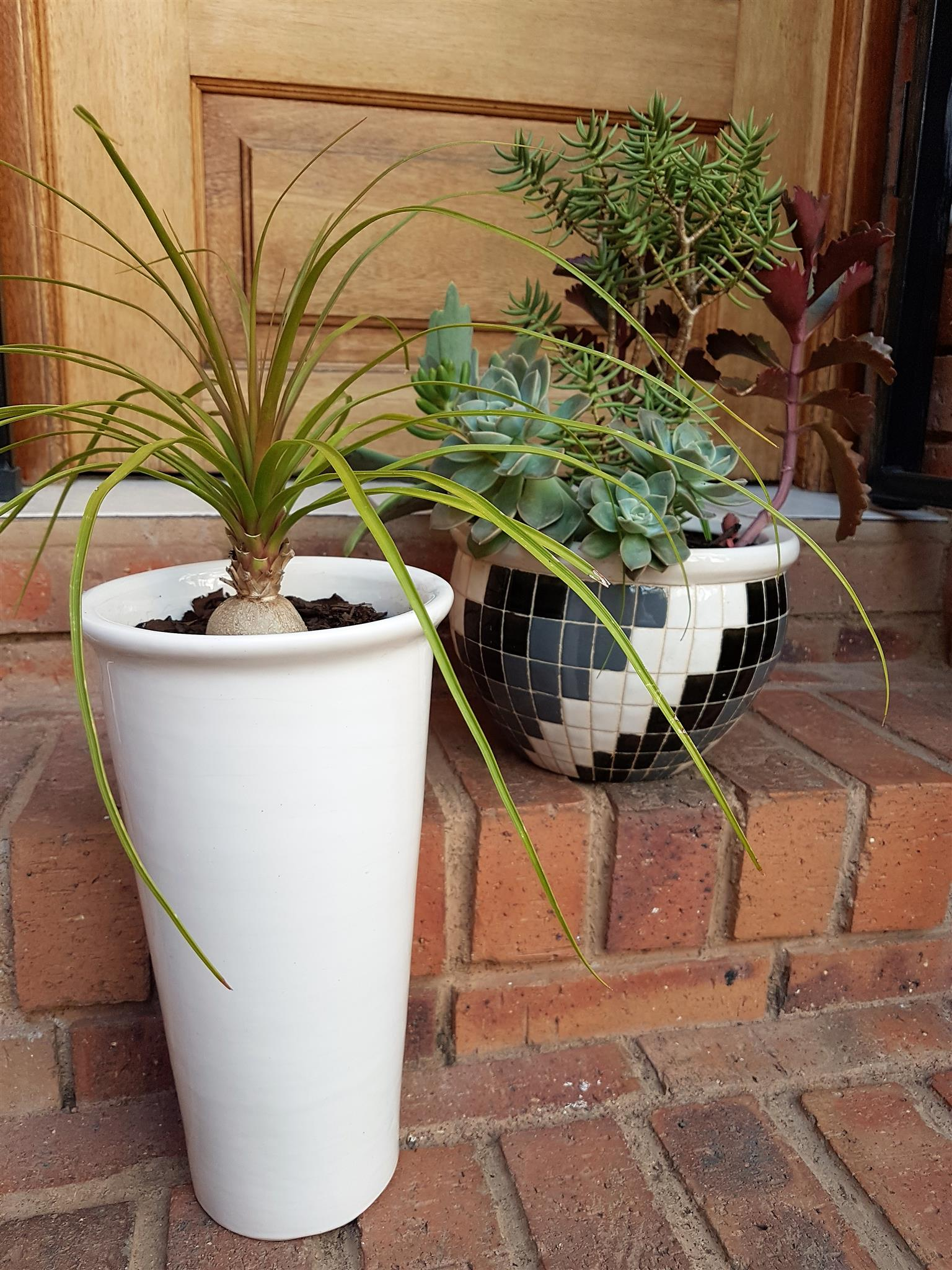 Potted and assorted plants