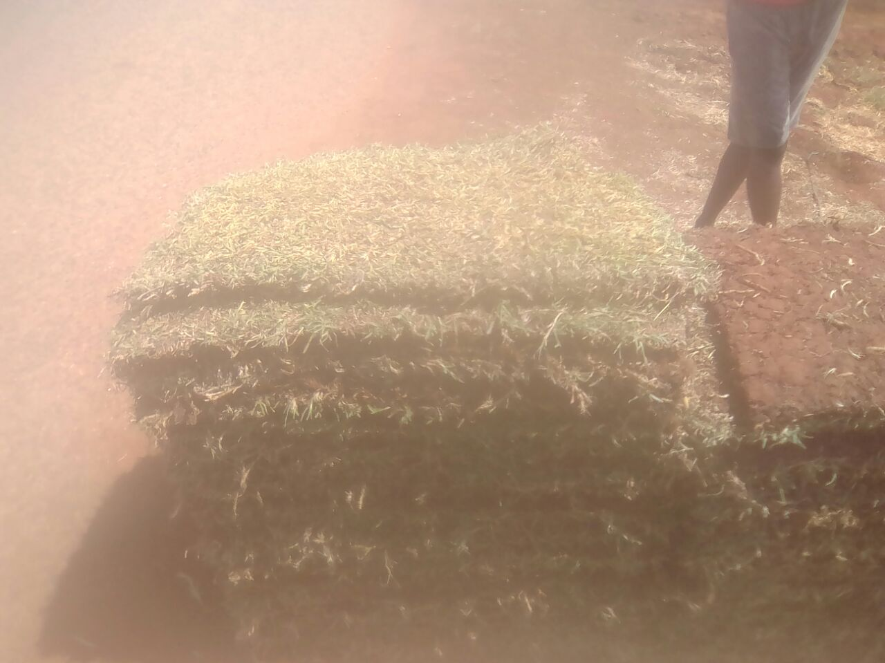 Grass Supply, Instant Lawn, Irrigation, Boreholes, Pumps, Installation and More
