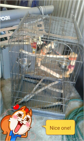 steel parrot cage with accessories