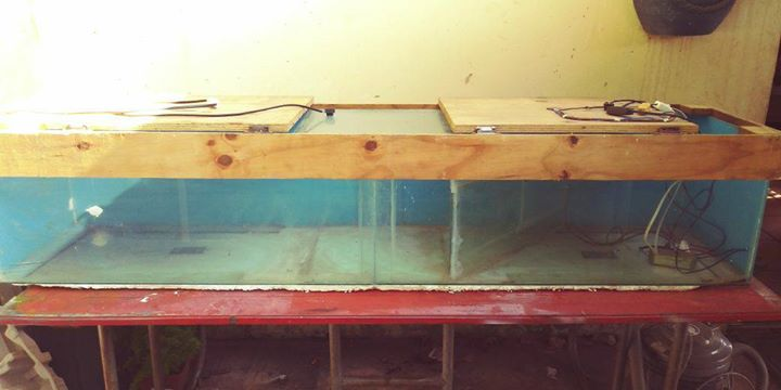 Fish tank with lid and light fittings