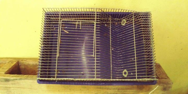 Mice cages x6