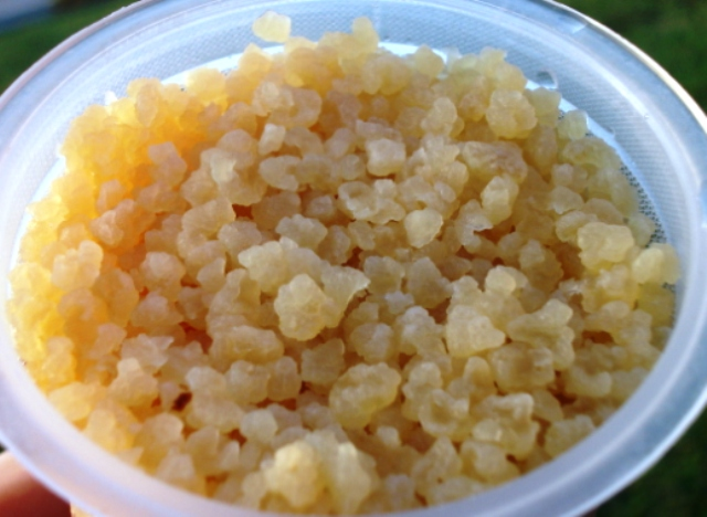 kefir grains