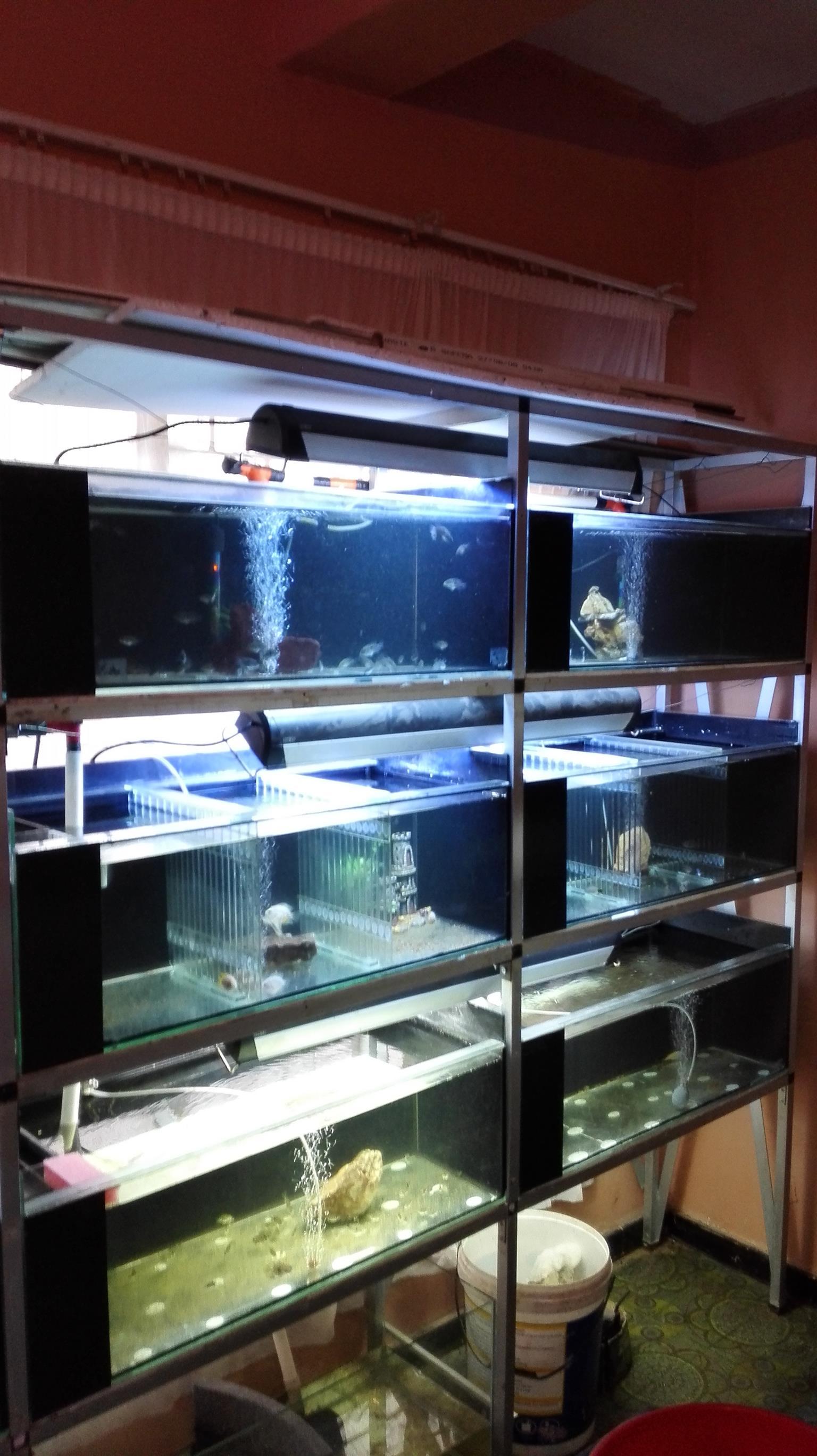 Multiple fish tank setup