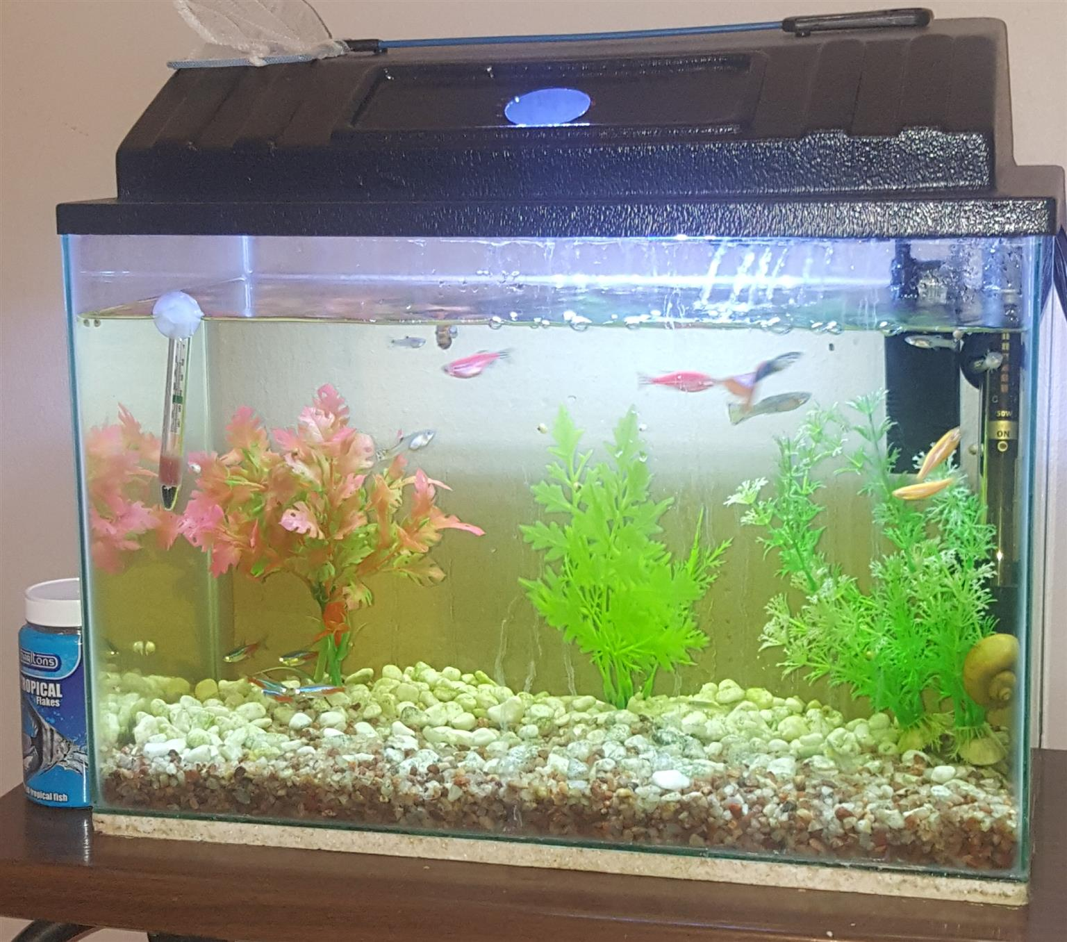 40L Tropical tank with fish