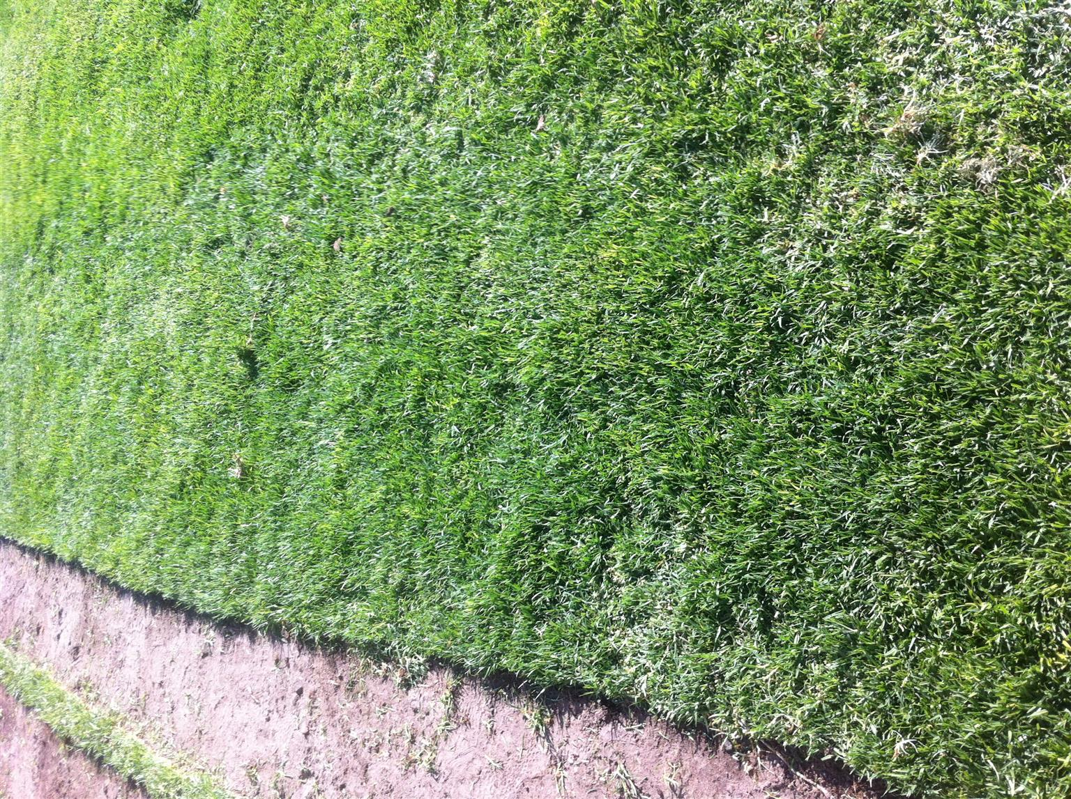 Good day we are suppliers of roll on lawn ie kikuyi buffalo ,Lm Beria