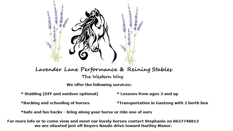 Stabling, training, backing and riding lessons