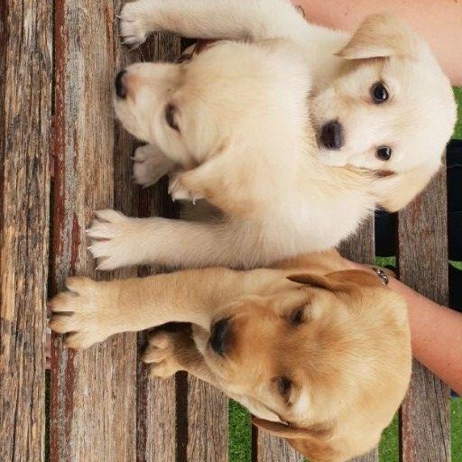 Junkmail jhb pets giveaways