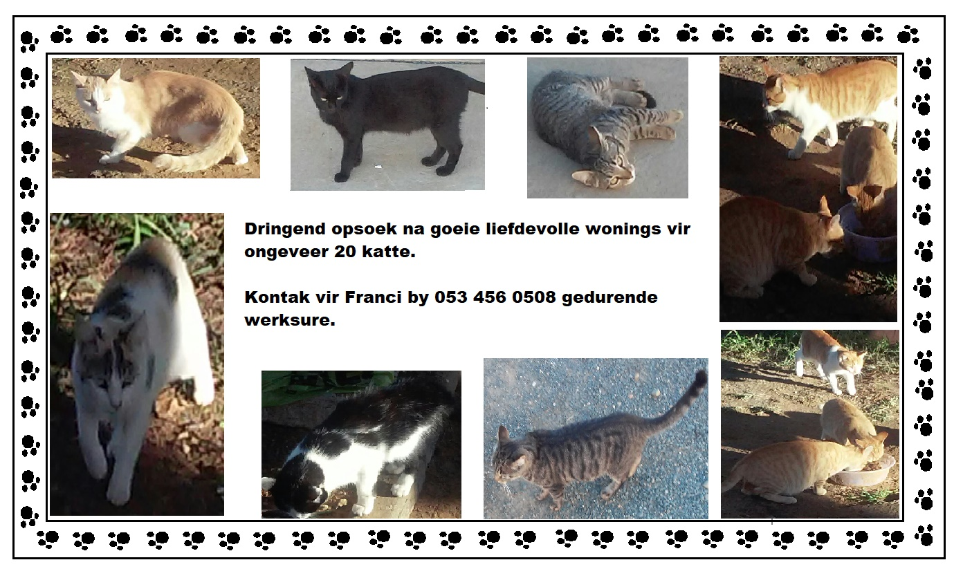 Urgently in need of good and loving homes for about 20 cats