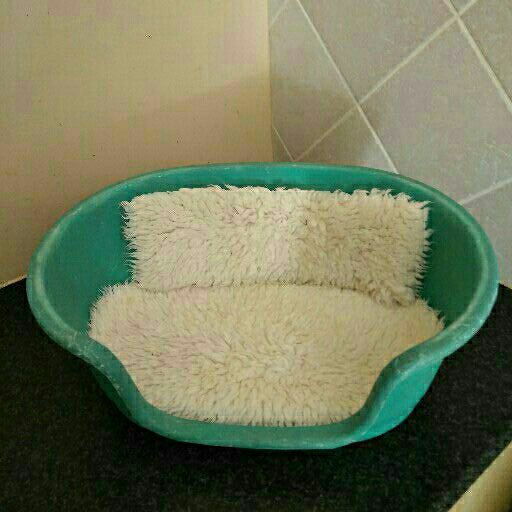 Small plastic dog bed