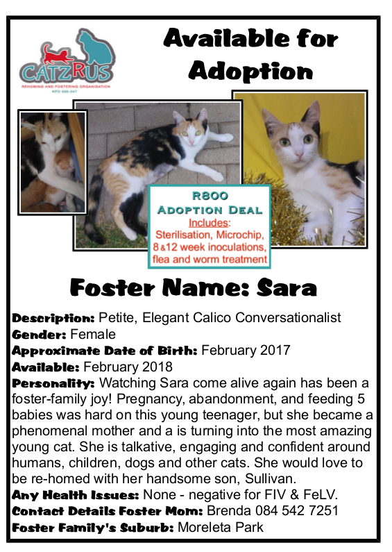 At CatzRUs, we're all about making happy endings from sad stories. Meet lovely Sara and be part of her story!