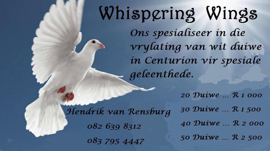 Wit duiwe te huur