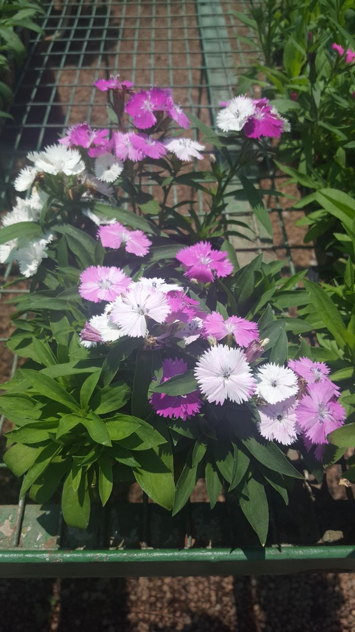 Seedlings, Flower, Veggie & Herbs