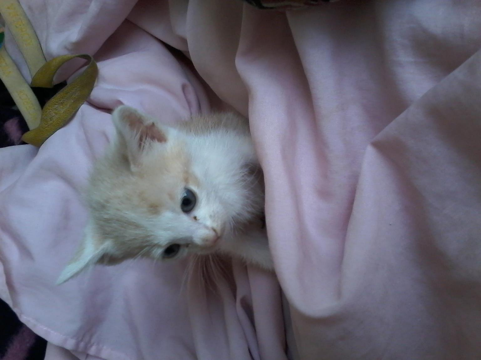 l have 6 cute kitten up for sale
