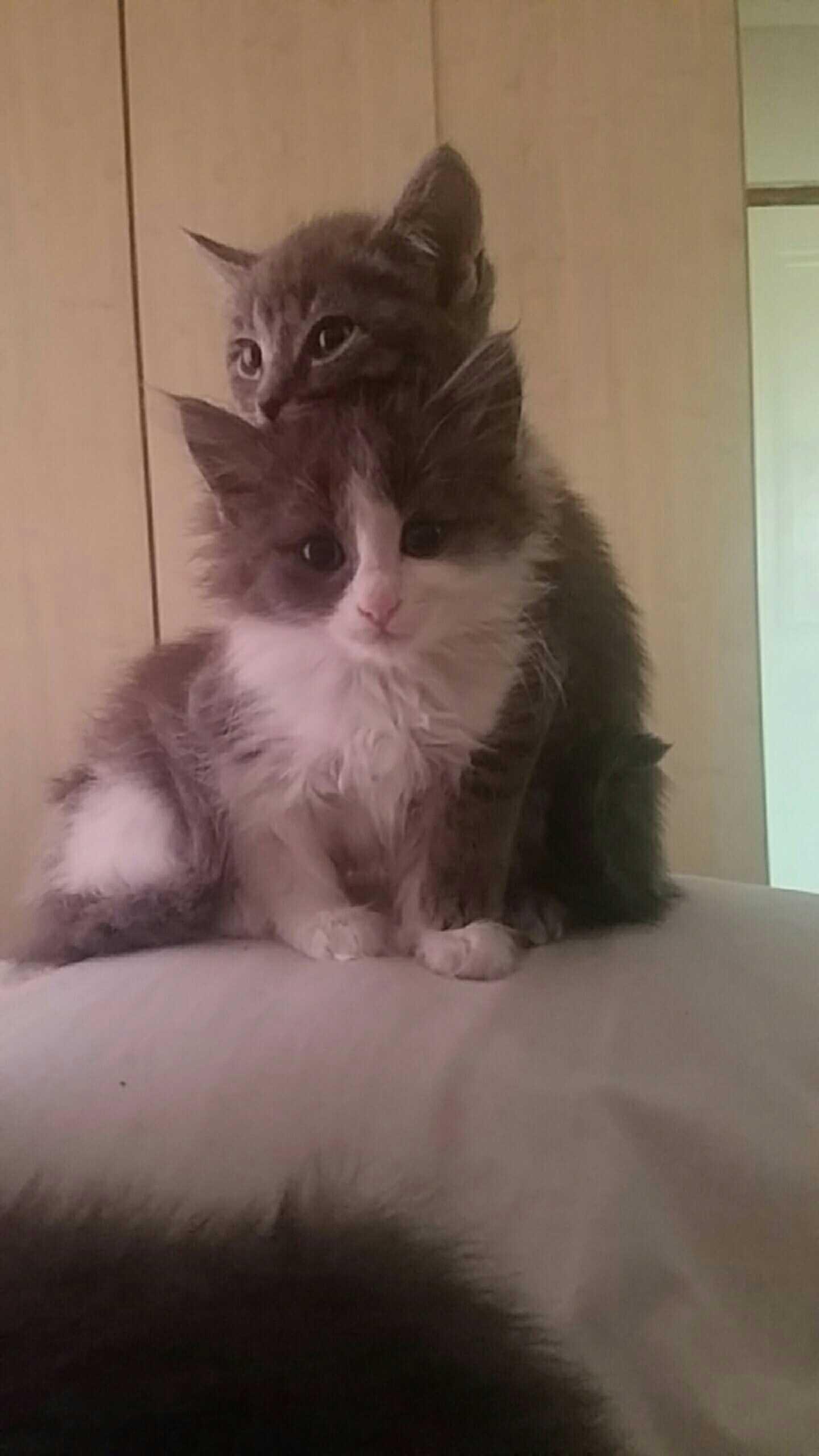 Beautiful fluffy kittens!