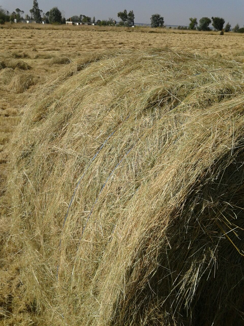 Oulands, Teff, Lucern Bales for sale