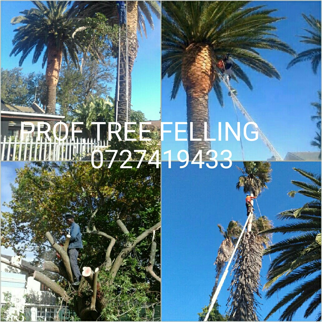 PROF TREE FELLING / STUMP REMOVAL (FULLY INSURED)