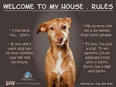 I need a Garden cottage Pet Friendly  R3500 per month