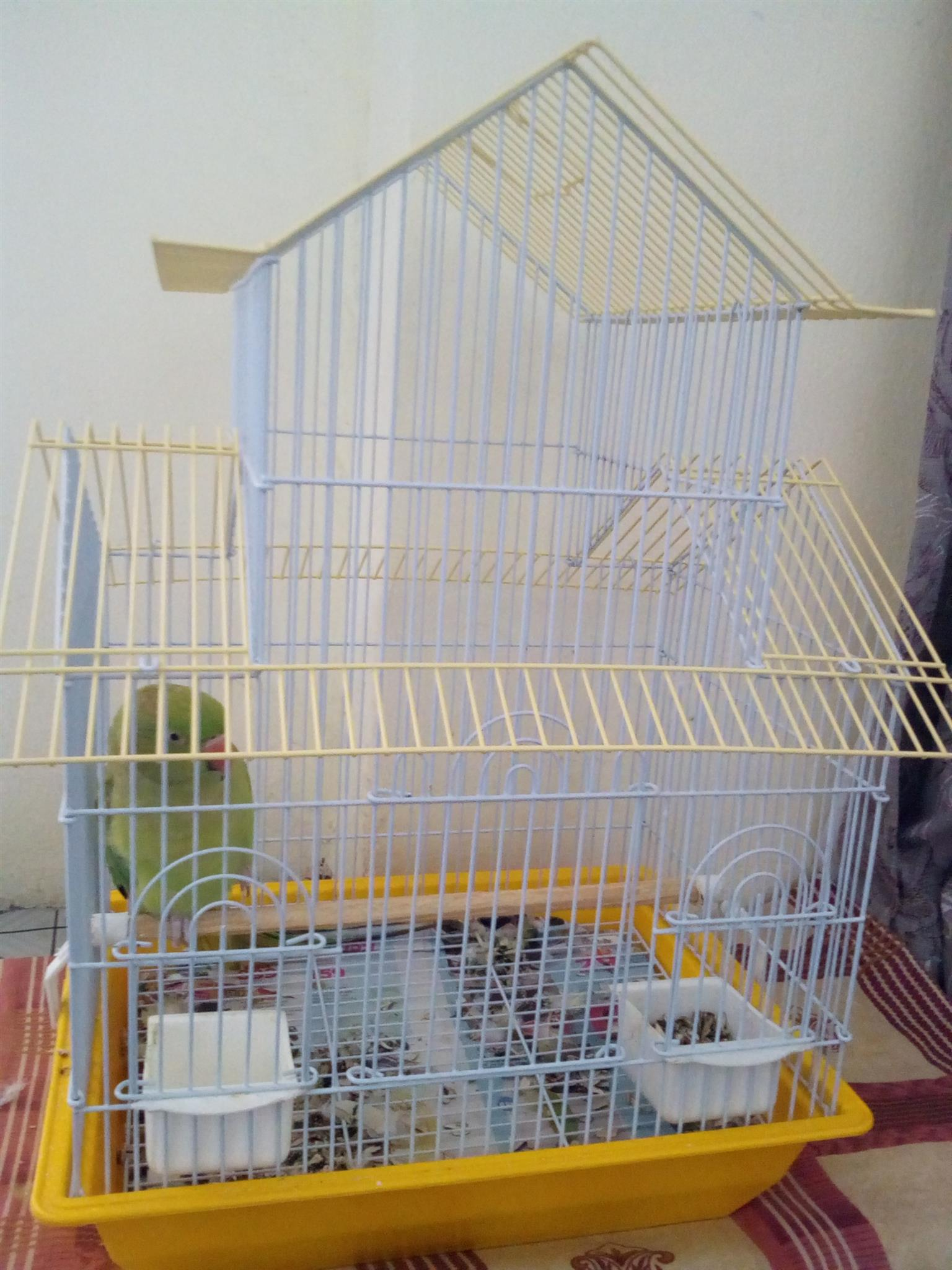 Bird cage for sale 150