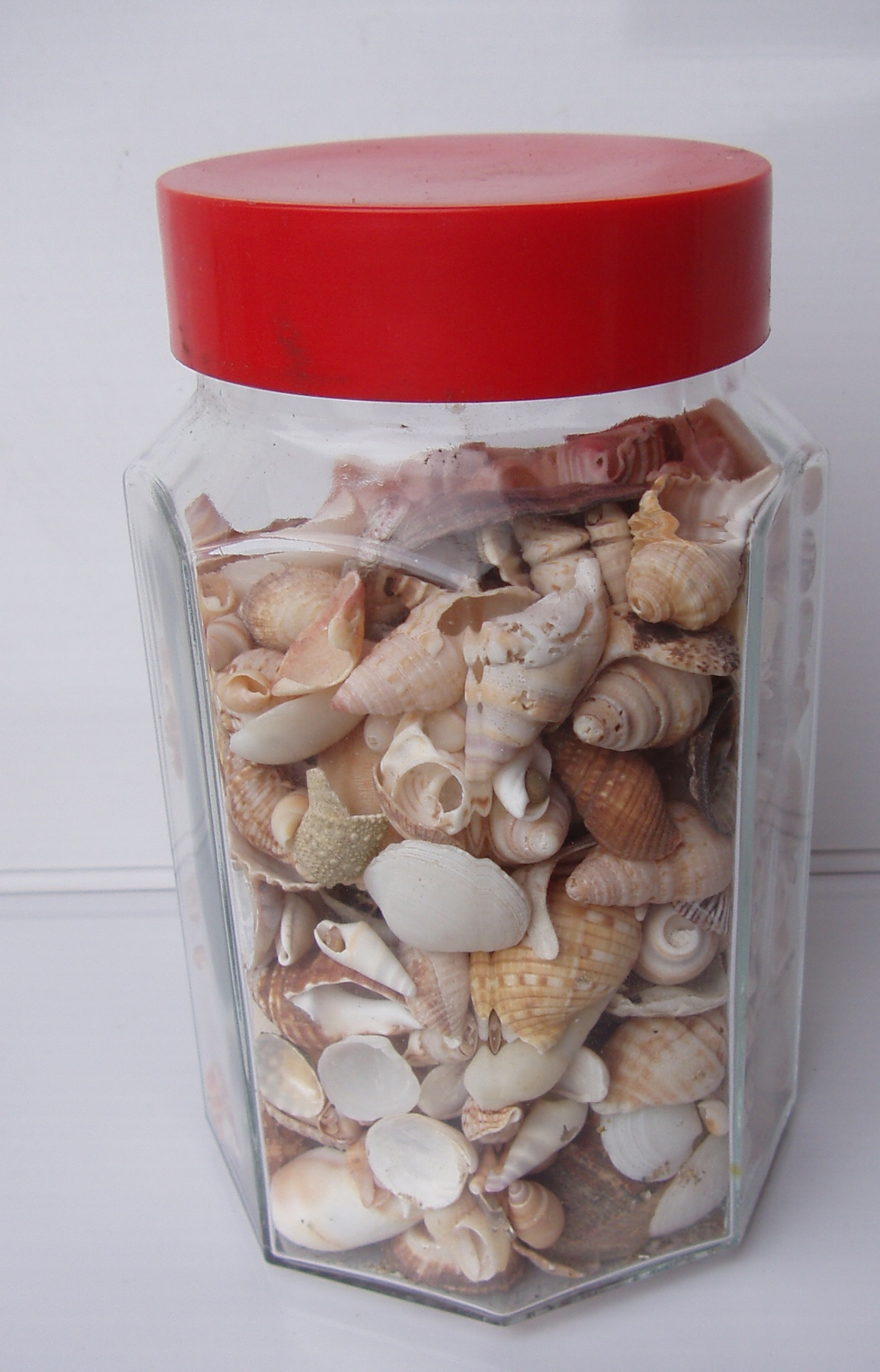Bottle of Sea Shells - all sizes - R 250