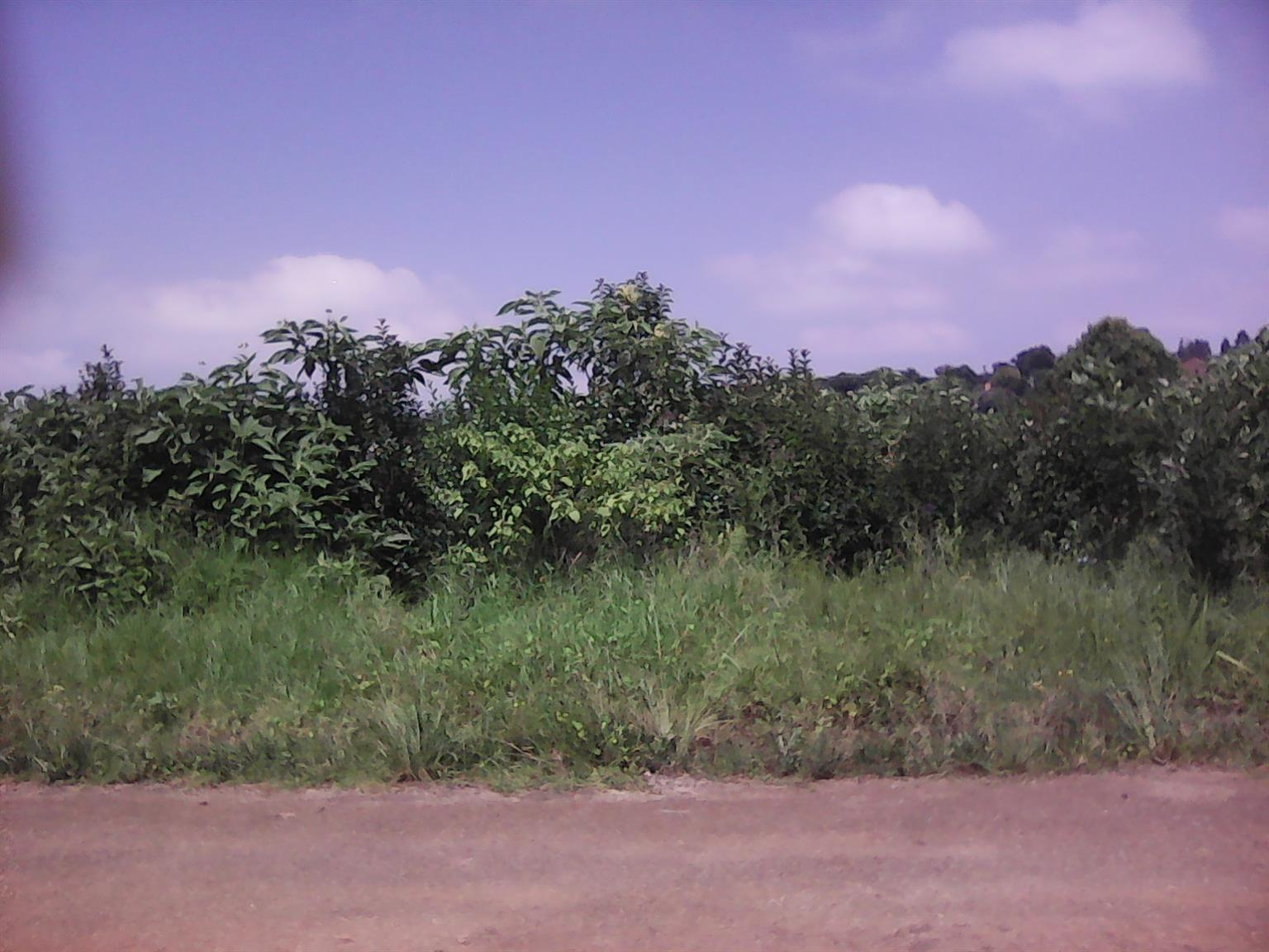 Vacant land for sale in Graskop