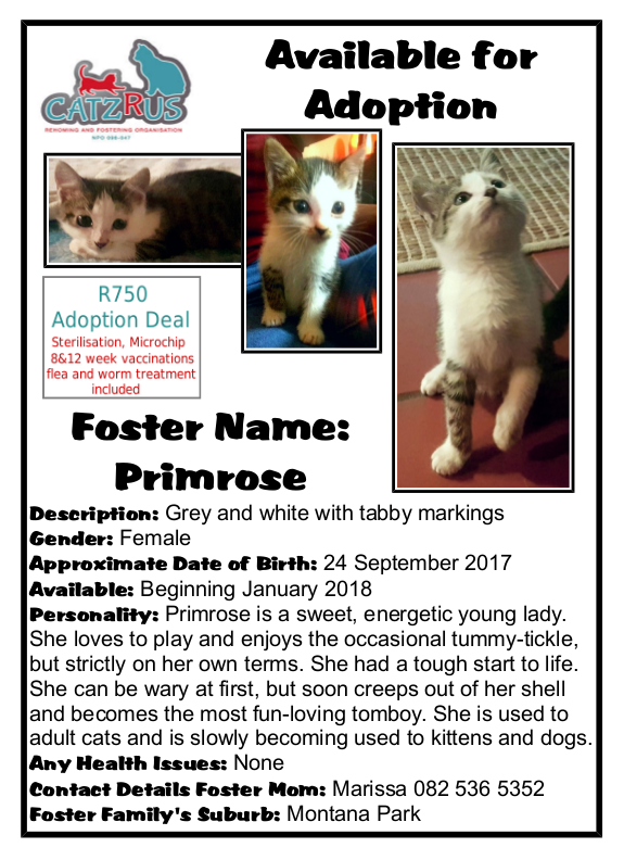 Primrose is looking for her happy forever-home. She is a CatzRUs Rescue-kitten. Please read all our info posters.
