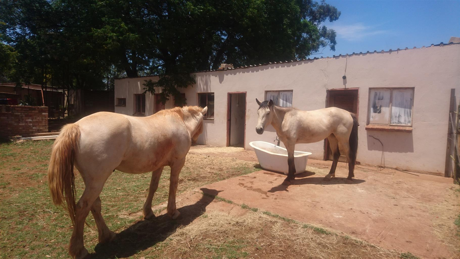 Gelding and Mare for sale