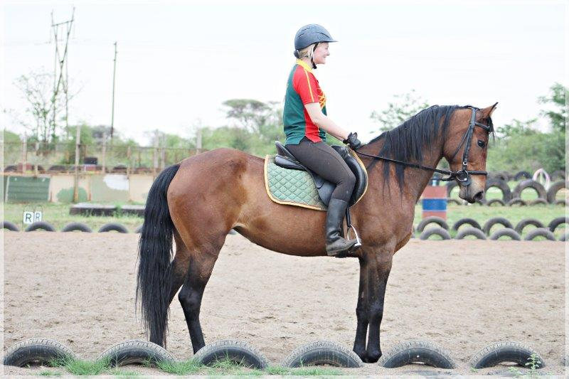 SA Boerperd mare for sale