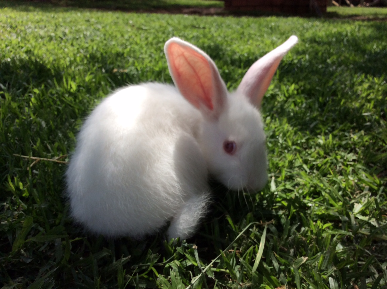 cute New Zealand bunnies
