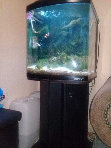 Marine Fish Tank for sale!!!