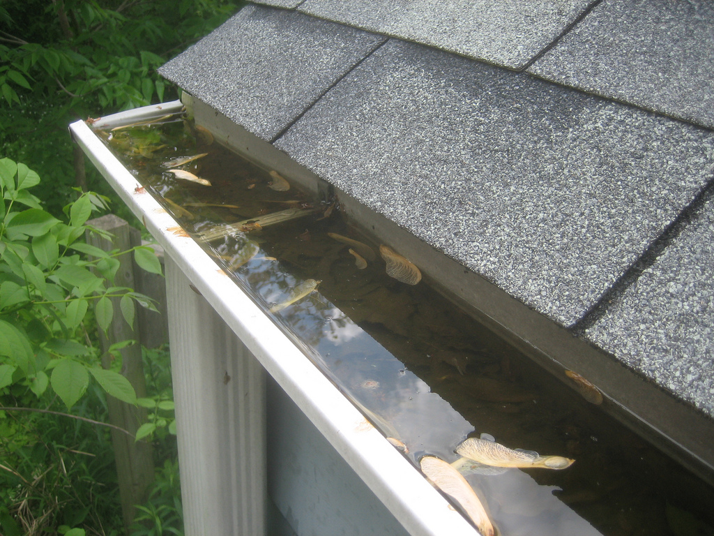 Gutter cleaning services!!!repair installation and roof repairs 24/7 help