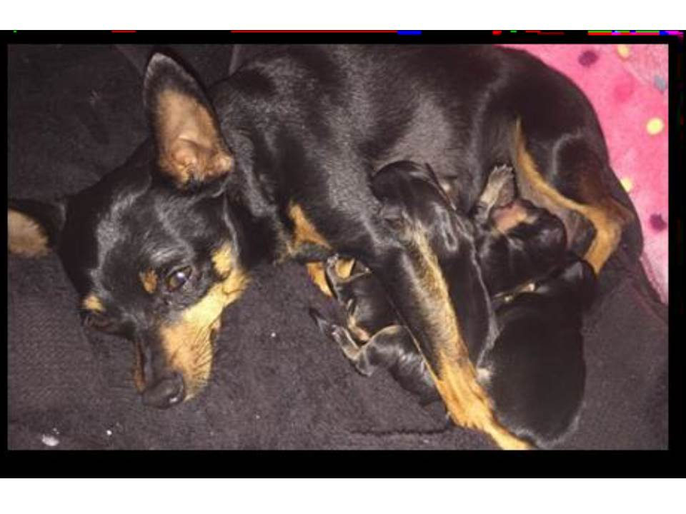 MIN PINS Available