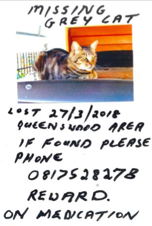 MISSING CAT IN QUEENSWOOD, PRETORIA