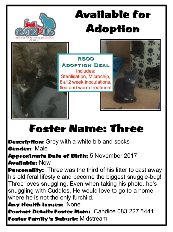 Our Foster-loved kittens come to you sterilised, inoculated, microchipped and de-wormed - for just R800. CatzRUs Rescue!