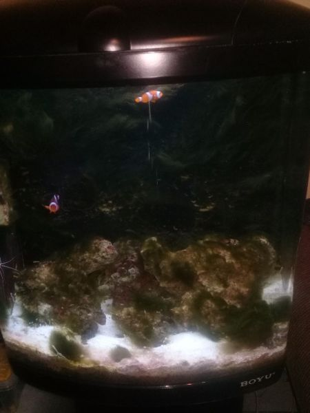 Complete Marine Fish Tank for sale!!!