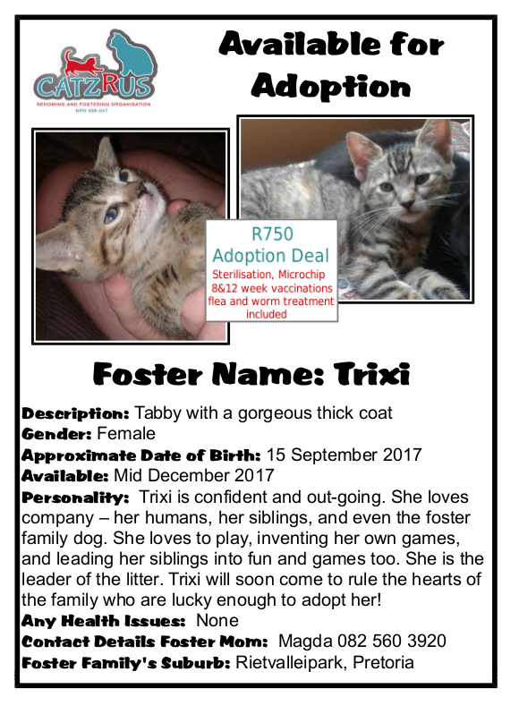 Meet Trixie - an adoption opportunity from CatsRUs Rescue Organisation