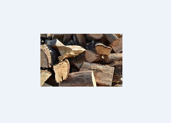 We are a Reliable Tree Felling Company