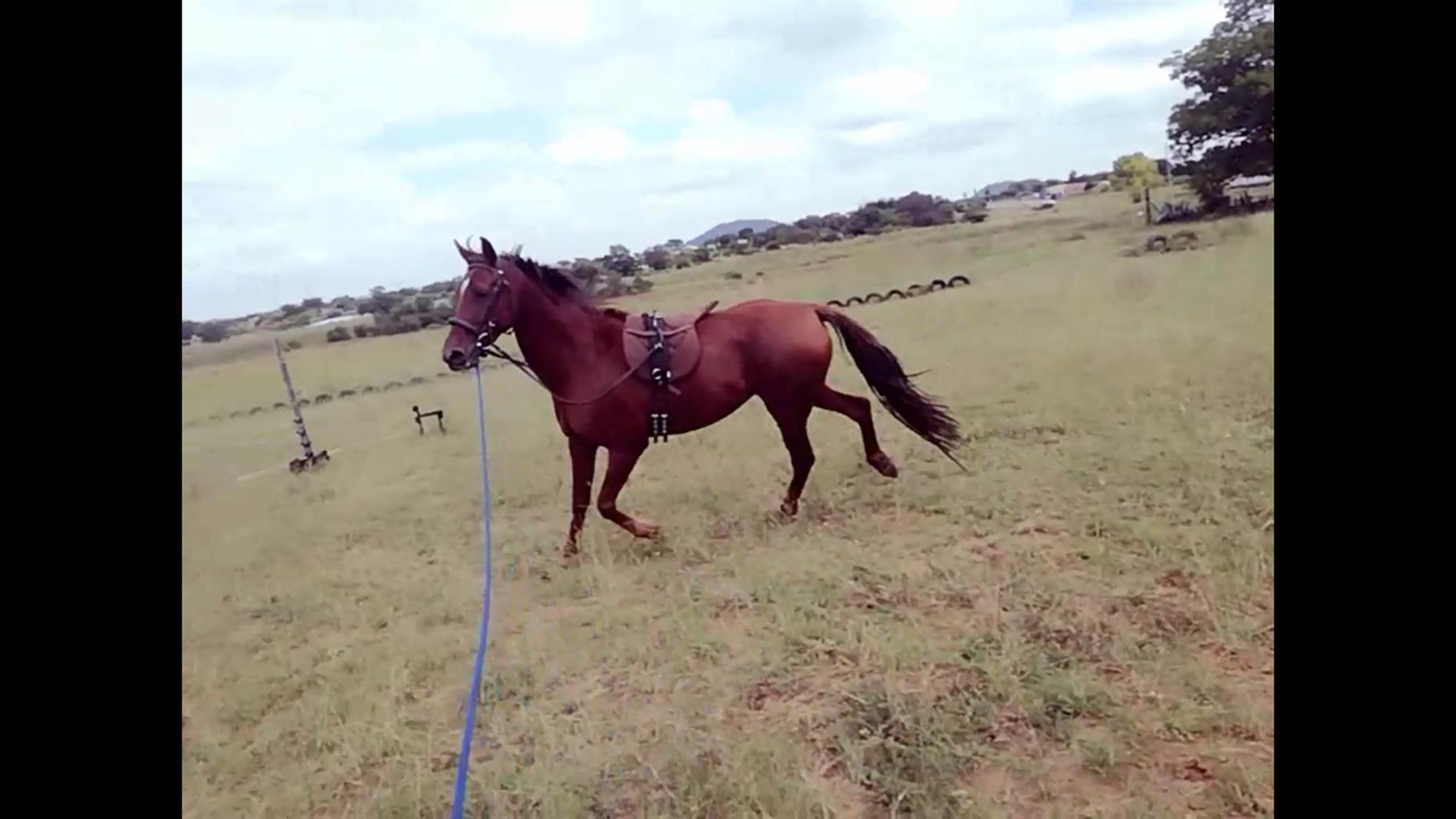 Three mares