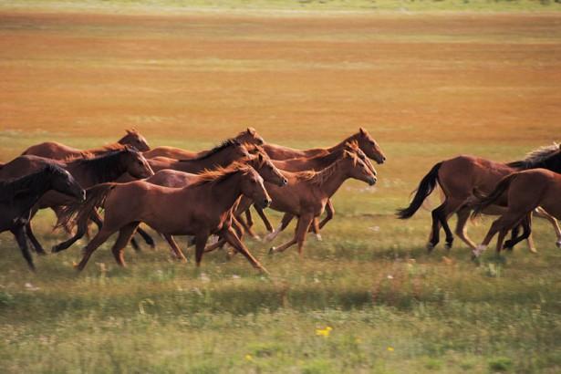 Natural Horse Livery - Irene Pretoria (No Stabling)