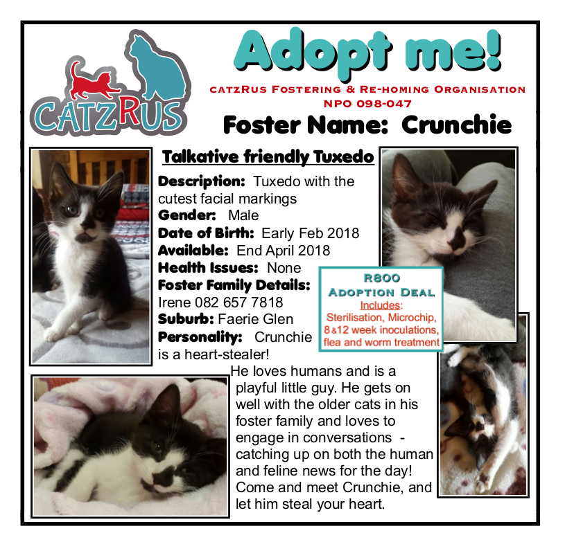 Let this Tuxedo boy steal your heart! A CatzRus kitten, Pretoria East. Fee includes Steri, inoculations, microchip...
