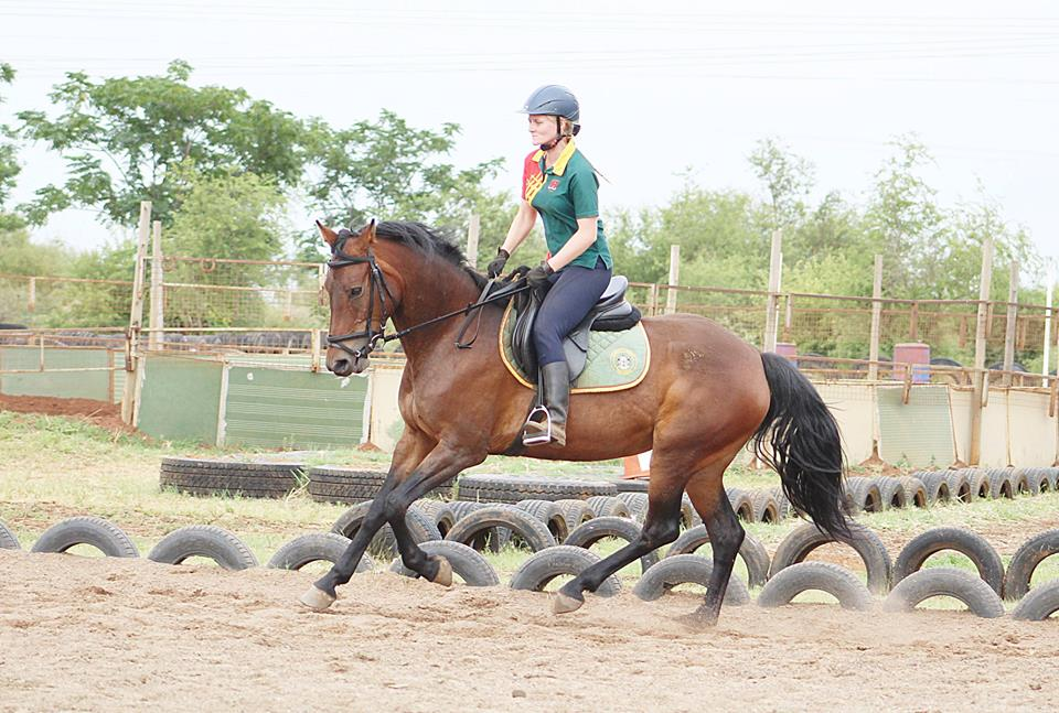 STUNNING SANESA HORSE FOR SALE