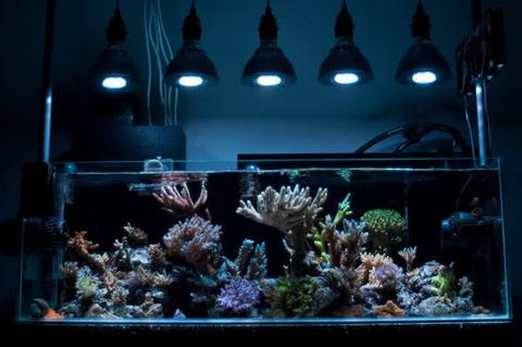 E27 15W 5 LED Aquarium Light