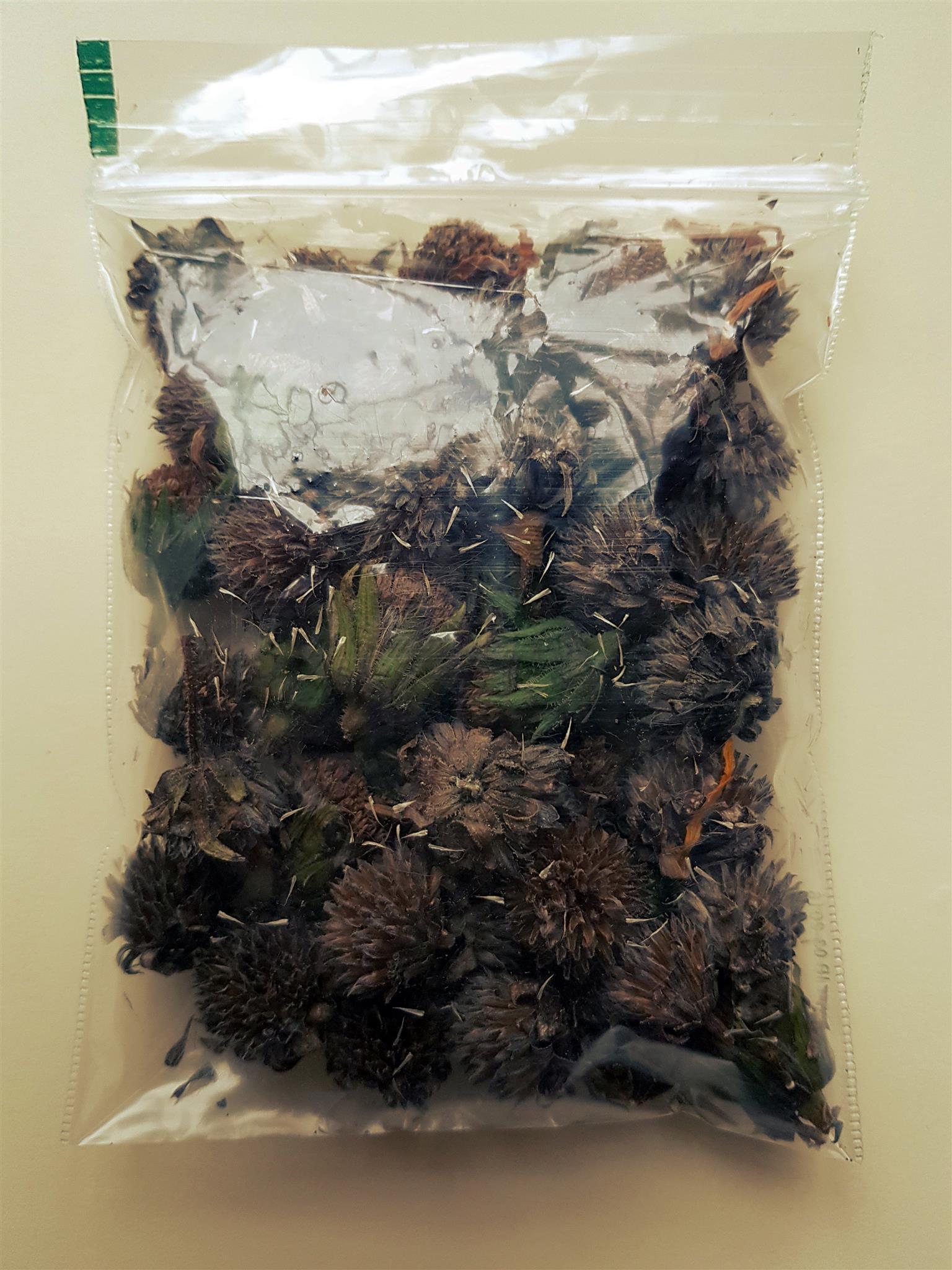 Jerusalem Artichoke Seeds